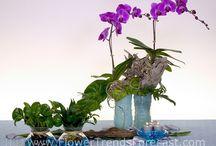 Flower Trend: Aqua Culture 2014