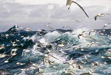 - Seagulls - Möwen!