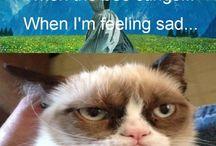 Grumpy Cat / Who doesn't love Grumpy Cat?