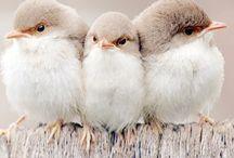 Birds / by Jenny Skinner