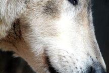0 - Kutyák