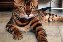 Inspiratie kattenfotografie