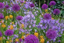 Flower inspiration / Garden planning