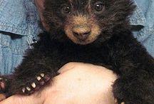 teddy bear&ぬいぐるみ