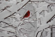 "Snow, ice, frost, "" Yeah it's winter "" :) / by Martie Verveer-Hesse"