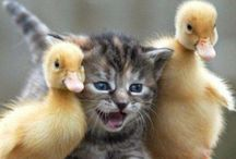 Cats...miau