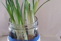 DIY Ideen - MalerKlecksi - / DIY Ideen von meinem Blog. DIY Dekoration, DIY zum verschenken, DIY mit Pflanzen, DIY zum Geburtstag, DIY zum Upcycling, DIY mit Beton, Gips oder Kaltporzellan, DIY als Tischdekoration