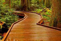 A Path I'd Like To Take