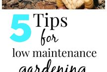 Low Maintenance Gardening / Gardening can be both a hobby and a skill, but for those who don't have it it's a nightmare! Check out these low maintenance gardening tips:
