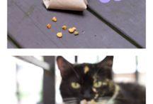 diy kattenspeeltjes