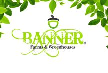 BANNER FARMS & GREENHOUSES©   UNITED STATES DEPARTMENT OF AGRICULTURE ORGANIC CERTIFIED© / BANNER FARMS & GREENHOUSES© ASHEVILLE, NC   BANNER ELK, NC   NEBO, NC UNITED STATES DEPARTMENT OF AGRICULTURE (USDA), ORGANIC CERTIFIED©