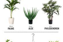 plants!! ✨