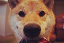 doggies / cute doggies