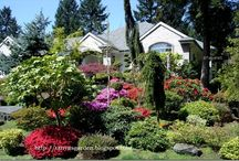 Záhrada - inšpirácie