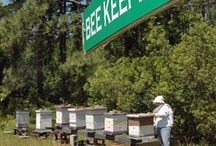 Bees A Buzz and About / Anything You Need Or Want To Know About Bees