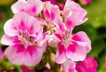 virágok ápolása