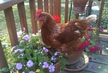 Peeps, Quacks, Blooms & Hats / chickens, ducks, flowers & hats
