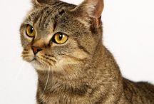 Asian cat / Cat
