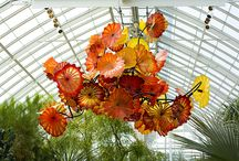 dale chihuly / by Anne Beier Schock