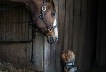 horse with dog