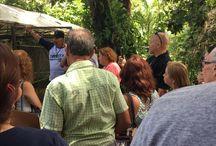 Visitas Grupales / Eventos donde visitamos como grupo diferentes Puntos de Ventas de Orquideas en Puerto Rico