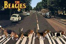 ビーグル犬♡