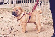 MY DOG ... / Emy la mia cucciolina