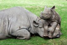 Amazing Pictures-Mammals / Discover amazing pictures about mammals.