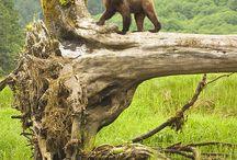 Jungle Wall