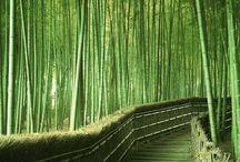Foresta di bamboo, Arashiyama