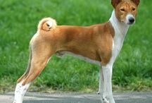 Dogs I really need to adopt / A collection of my favorite dog breeds / by cici