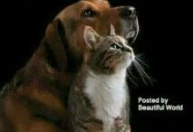 frasi d'amore verso cani e gatti