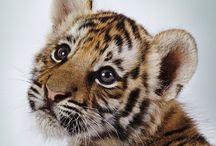 Adorable Animals!¡!