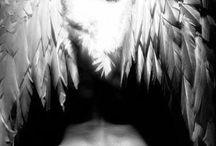 Angel pics and angel wings