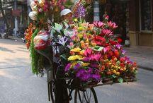 Kvety na kolesách