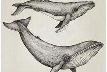 киты и кашалоты