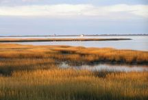 Salt Marshes / I love southern salt marshes.  The combination of grasses and water.  The color, the texture inspiring, summer and fall.  I would live on a salt marsh if I could.