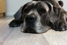 Achille my dog