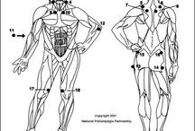 El cuerpo Humano / Puntos claves en nuestro cuerpo.
