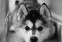 Dogs I want! / by Audrianna Pennington