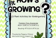Plants for KG