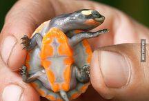 Turtles / by Keith Bradshaw