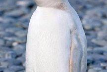 πιγκουοινοι
