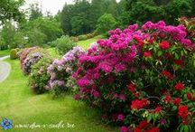 кустарники цветущие