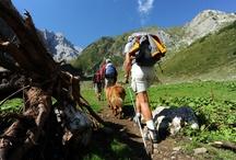 Sport & Aktiv / Wandern, Radfahren, Klettern, Bergsteigen, ... :-)