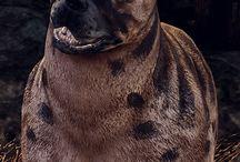 oc: valpuri cousland