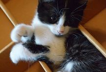 kittens n cats