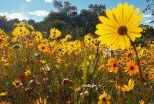 Flowerpower Namaqaland