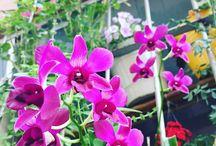 Orquídeas em Apartamentos