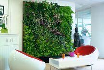 Murs végétaux